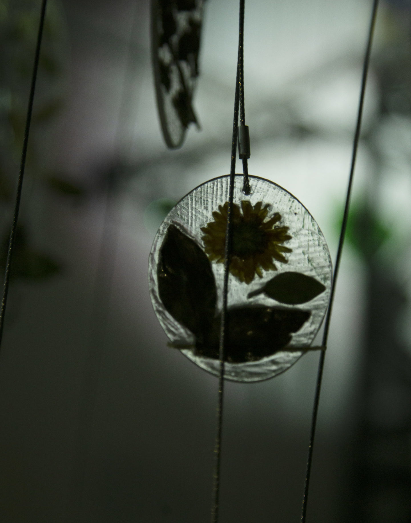 a clear illuminated panel embdded with a daisy