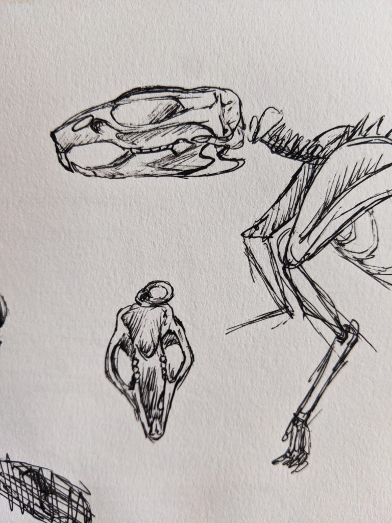 rat skeleton sketch